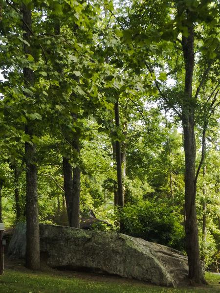 Cumberland Falls Nature Lover State Park  Nature Photography Wood Nature Trees Corbin Kentucky