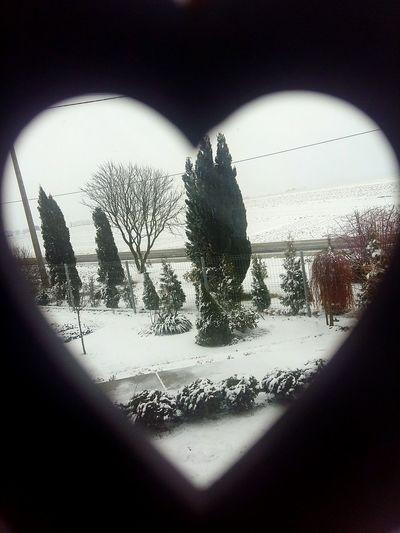 Ehh Winter Tree Snow Nooooooo! Snow :(