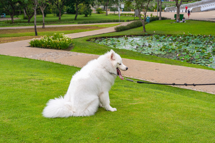 White cat in park