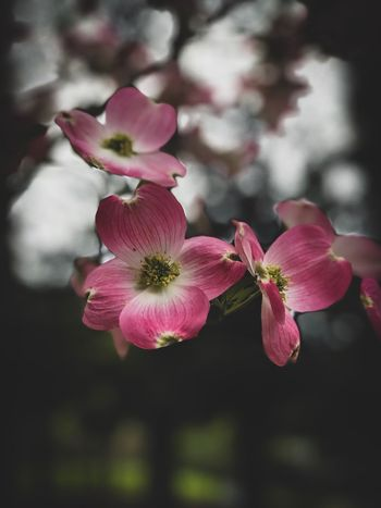 Beautiful blooms in the park. Flowering Plant Plant Flower Fragility Vulnerability  Freshness Beauty In Nature Growth Flower Head Focus On Foreground Pink Color Close-up Inflorescence Petal Nature No People Outdoors Day Botany Pollen