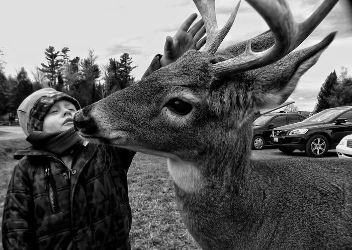 Capture The Moment Get Close Service Animals Deer The Great Outdoors From My Point Of View Open Edit Taking Photos Check This Out Enjoying Life Streamzoofamily EyeEm Best Shots Follow4follow Followme Black & White Black And White Monochrome Eye4photography  Wildlife & Nature First Eyeem Photo Nature Animal Close-up My Best Photo 2015 The Moment - 2016 Eyeem Awards