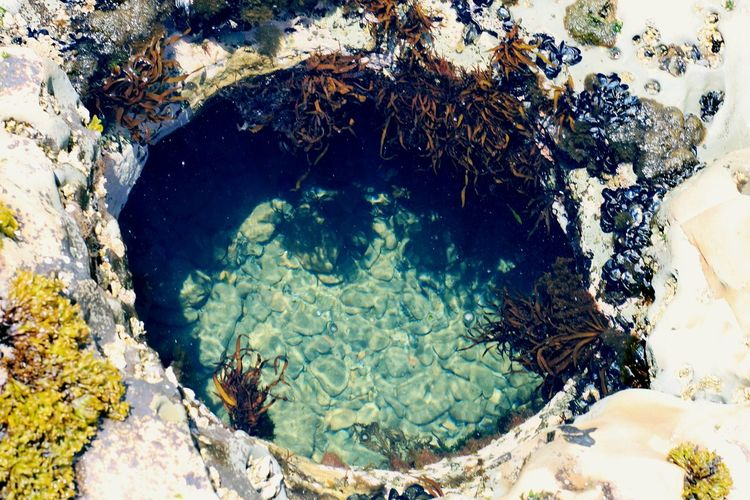 Nature Rock - Object No People Underwater Water Tree Day Sea Outdoors Beauty In Nature UnderSea Unique Perfect Circle Coastline Landscape California EyeEm Best Shots - Landscape Tidepools Hole Hole In The Ground Coastal Feature Rock Formation Geology Ocean