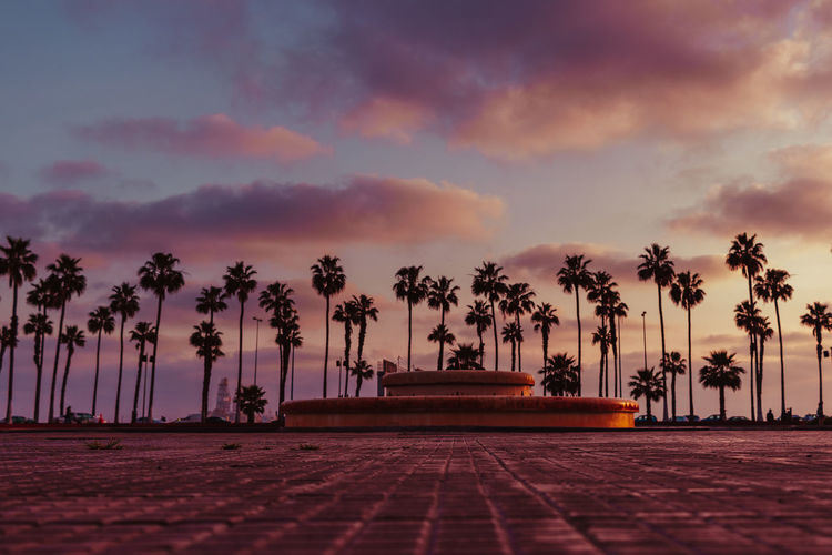 Las Palmas, 7 am Sky Tree Palm Tree Tropical Climate Plant Cloud - Sky Sunset Nature Scenics - Nature Beauty In Nature No People Tranquility Tranquil Scene Outdoors Footpath The Way Forward Direction Coconut Palm Tree Treelined