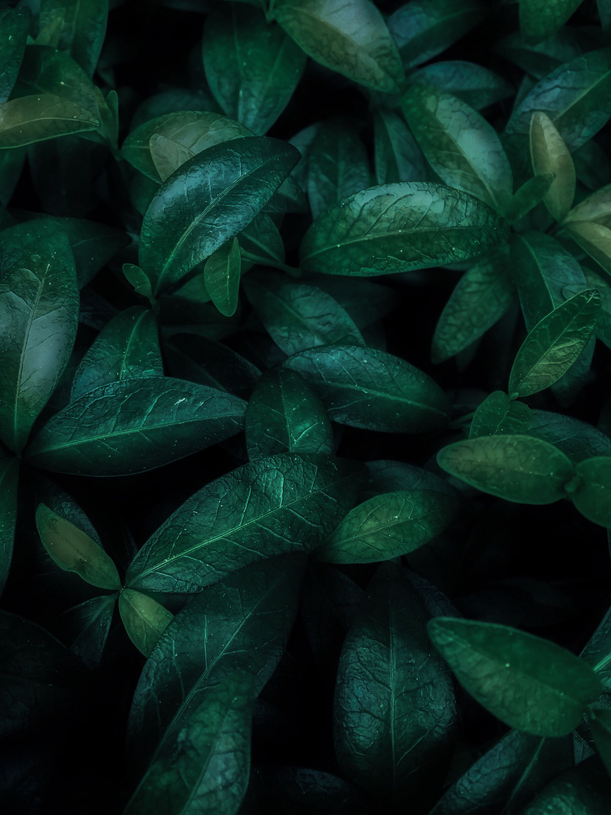 full frame, backgrounds, leaf, plant, freshness, close-up, lush foliage, nature, growth, textured, fragility, green, green color, abundance, day, outdoors, botany, leaf vein, beauty in nature, repetition, large group of objects, vibrant color