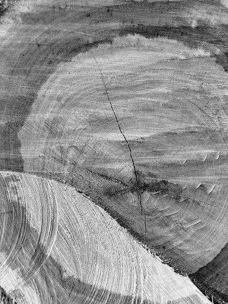 Pettern Annual Ring Tree Ring The Year Of Wood The Year Of Tree Close Up Art Creative Close Up Photography Art Photography Creative Photography Imagination Imagination And Creative Imagination Photography Imagination Collection