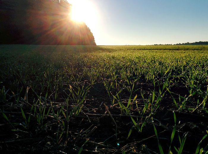 Dramatic Angles Landscape Sunlight Tranquil Scene Grass Sunbeam Field Tranquility Scenics Nature Growth Lens Flare Rural Scene Beauty In Nature Green Color Clear Sky Sun Plant Remote Outdoors Day Berlin Strausberger