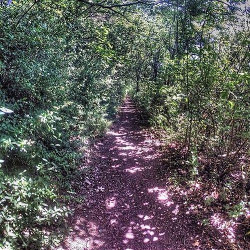 Sklblog Trail Singletrail