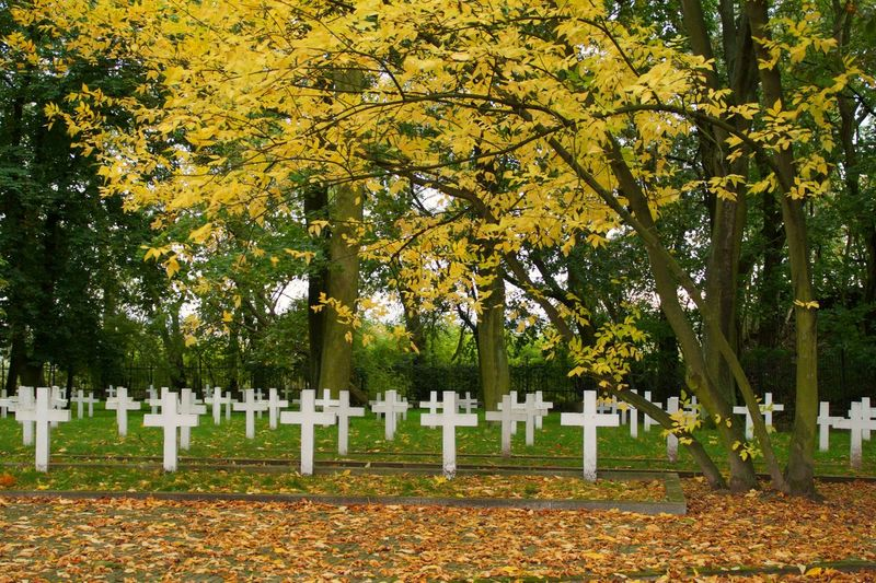 Military cemetery in Płock Autumn Leaves White Crosses Silence Calm Memory Tree Gravestone Graveyard Autumn Leaf Grave Cross Memorial Cemetery Tombstone War Memorial Fall Leaves
