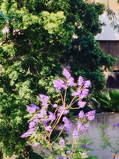 This morning from my window Beauty In Nature Flowers, Nature And Beauty Green Trees And Leaves Beautiful Place Nature Mobile Photography Check It Out