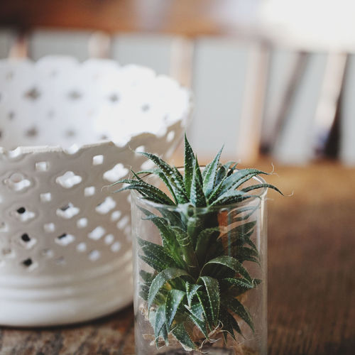 Succulent Plant In Jar By White Pot On Table
