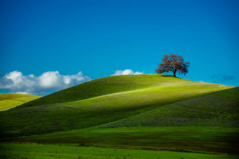 California Oak. December in California's Sacramento Valley brings green hills and, after a storm, wonderful crisp clear air. Blue Blue Sky California Clouds Clouds And Sky Foothills Grass Green Green Hills Landscape Nature Oak Tree Outdoor Scenics Simplicity Sky Spring Springtime Tranquil Scene Tranquility Fine Art Photography