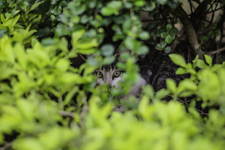 Hidden Cat Animal Themes Cat Cats Of EyeEm Domestic Cat Eye4photography  Eyeem Philippines Hidden Hide And Seek No People Outdoors Philippine Cats Selective Focus Street Cats Through The Lens Whisker Young Animal