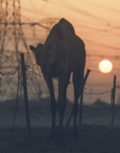 Oman_photography