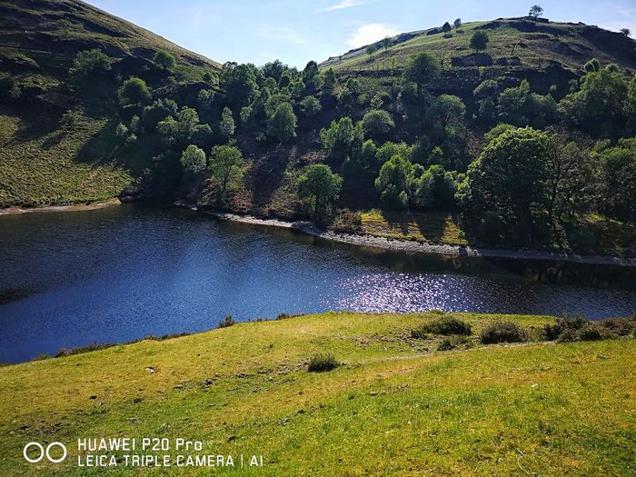 Elan Valley Mid Wales Tree Mountain Agriculture Tea Crop Rice Paddy Sky Grass Landscape Green Color