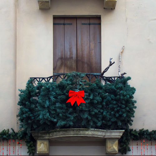Remembering Christmas in Italy. FILIPPI GIULIA PHOTOGRAPHY. Architecture Balcony Building Exterior Canon Christmas Christmas Decoration Christmas Tree Color Day Decoration Detail Details Door House Italy Lightandshadow Lookingup No People Outdoors Photographer Photography Pine Tree Streetphotography Terrace Window