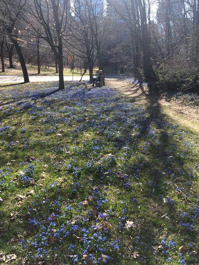 Blue Blue Flower City Flower Outdoors Park Tree 公園 憩いのひと時