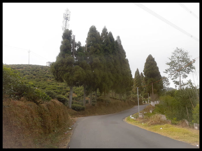 Road amidst trees and plants against sky