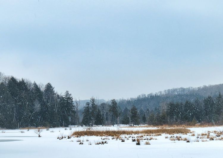Frozen marsh My Best Photo Sky Tree Winter Snow Frozen Snowing Mountain Marsh WoodLand Cold Temperature Snowcapped Mountain Coniferous Tree Evergreen Tree Needle - Plant Part Polar Climate Pine Woodland Frozen Marsh The EyeEm Collection