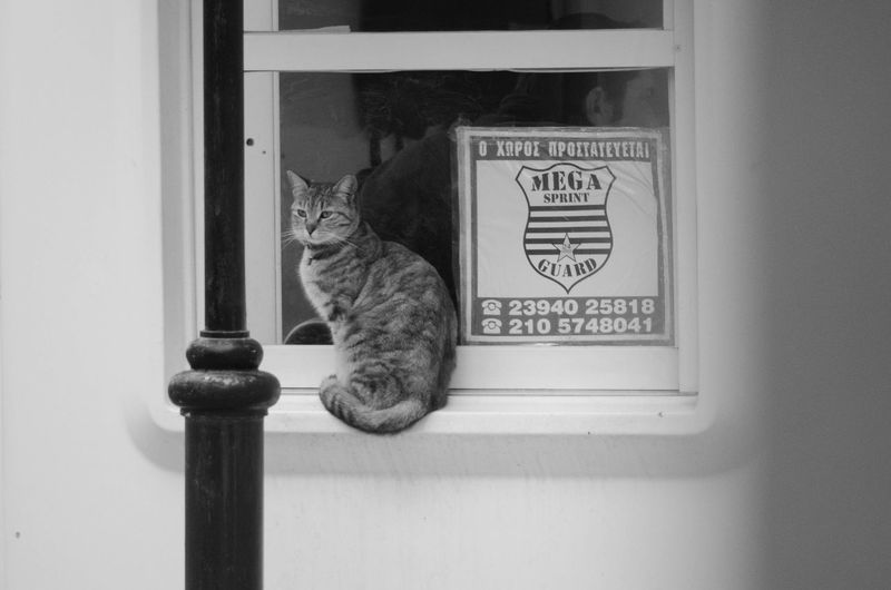 Cats Secure Zone. Watching on you Cat Domestic Cat Pets Window Animal Security Security System Security Guard Security Camera Secure Safe Watch