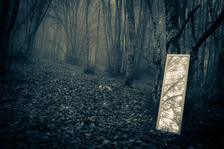 Little mirror in the misty forest Fear Ghost Halloween Mirror Plants Trees Wood Autumn Canfaito Creepy Forest Land Leaf Marche Mirror In The Forest Mirror Reflection Nature No People Non-urban Scene Outdoors San Severino Marche Spooky Tranquility Trunk WoodLand