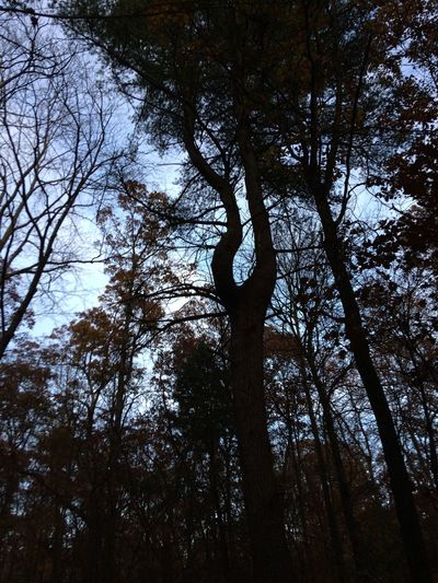 By Coal Township Walmart. No Edits No Filters Tree Low Angle View Beauty In Nature With My Bestie <3