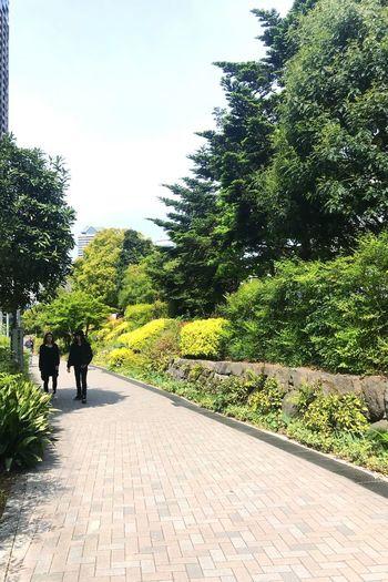 Rear view of people walking on footpath amidst trees against sky