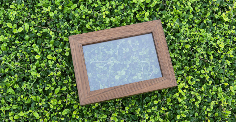 Photo frame on Green leaves Tropical garden background. Plant Nature Growth Green Color Day Tree No People Wood - Material Outdoors Leaf Frame Plant Part Architecture Beauty In Nature Directly Above Geometric Shape Window Square Shape Land Rectangle Photo Frame Tropical