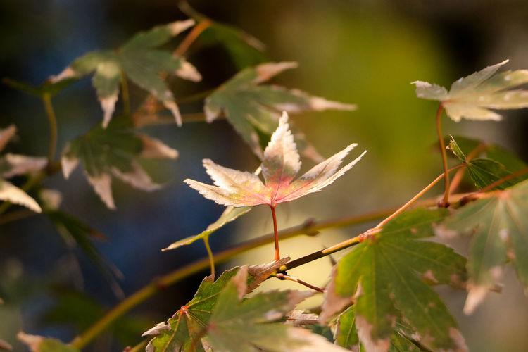 秋日私语 Autumn