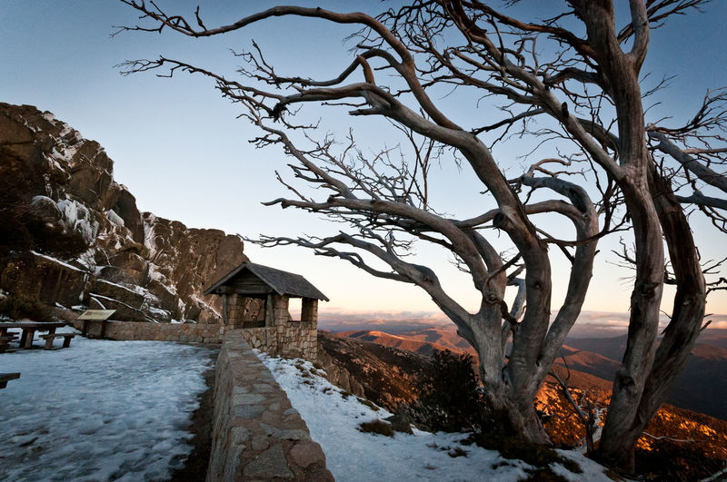 Mount Buffalo Tree Snow Cold Temperature Winter Bare Tree Mountain Rural Scene Branch Sky Landscape Deep Snow Snowcapped Mountain Extreme Weather Ski Track Frozen Weather