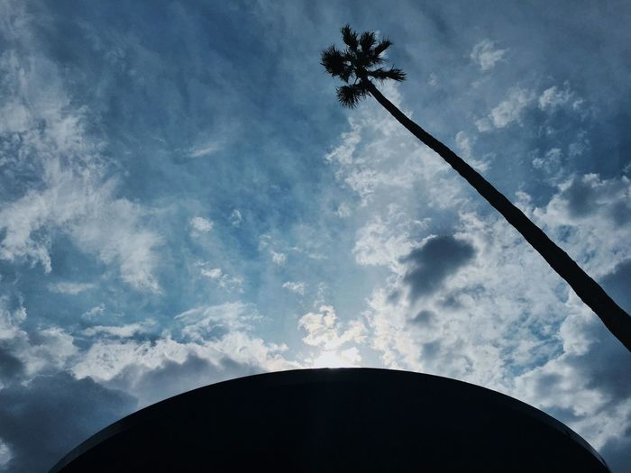 Nature's Diversities Palm Tree Clouds Sky Santa Monica California Blue Grond View