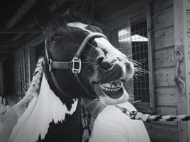 Give Us A Smile Horse Horse Photography  HORSE TEETH Teeth Teeth Model Smile Portrait Headshot Smiling Close-up