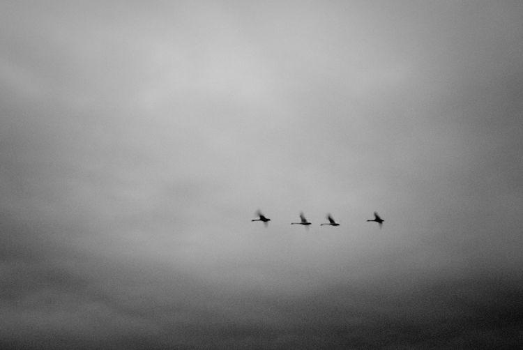 Bird flying over the sky