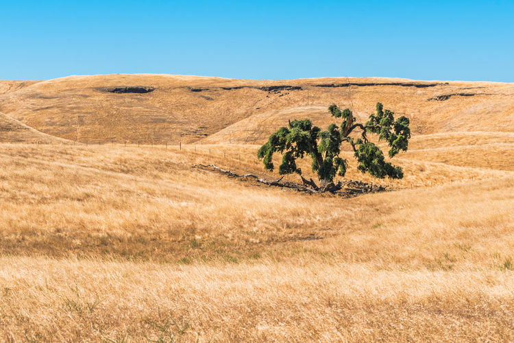Lonely tree sitting alone in field in northern California. Blue California Desert Explore Growth Lonely Nature Nature No People Out Outdoors Travel Tree