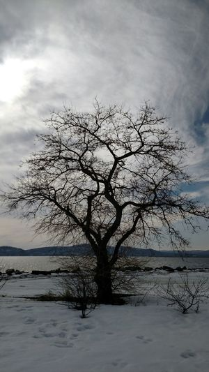 Bare trees by sea against cloudy sky