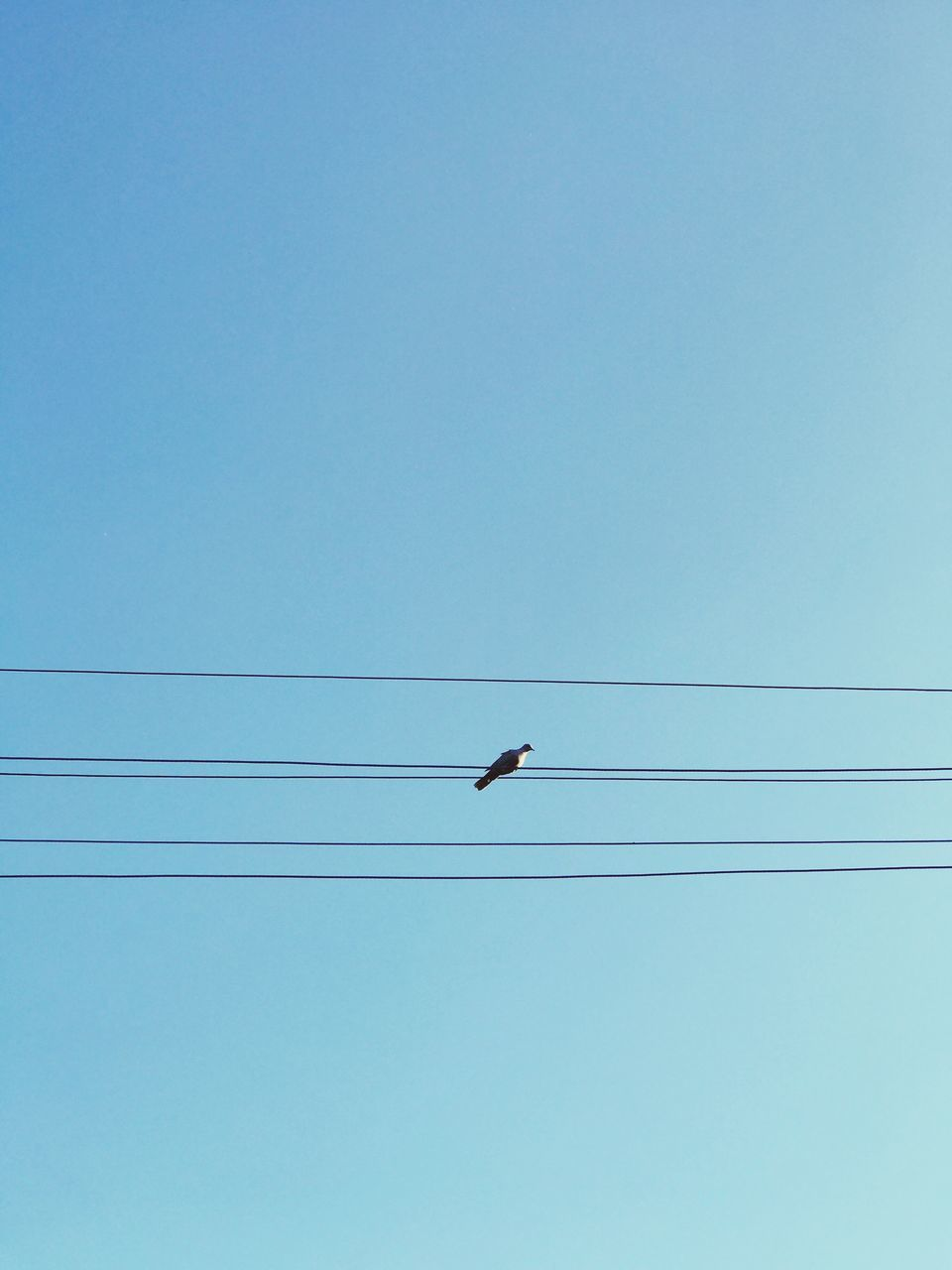 cable, low angle view, copy space, clear sky, bird, flying, blue, animal themes, animals in the wild, power line, mid-air, power supply, no people, connection, electricity, outdoors, nature, day, one animal, technology, telephone line, sky