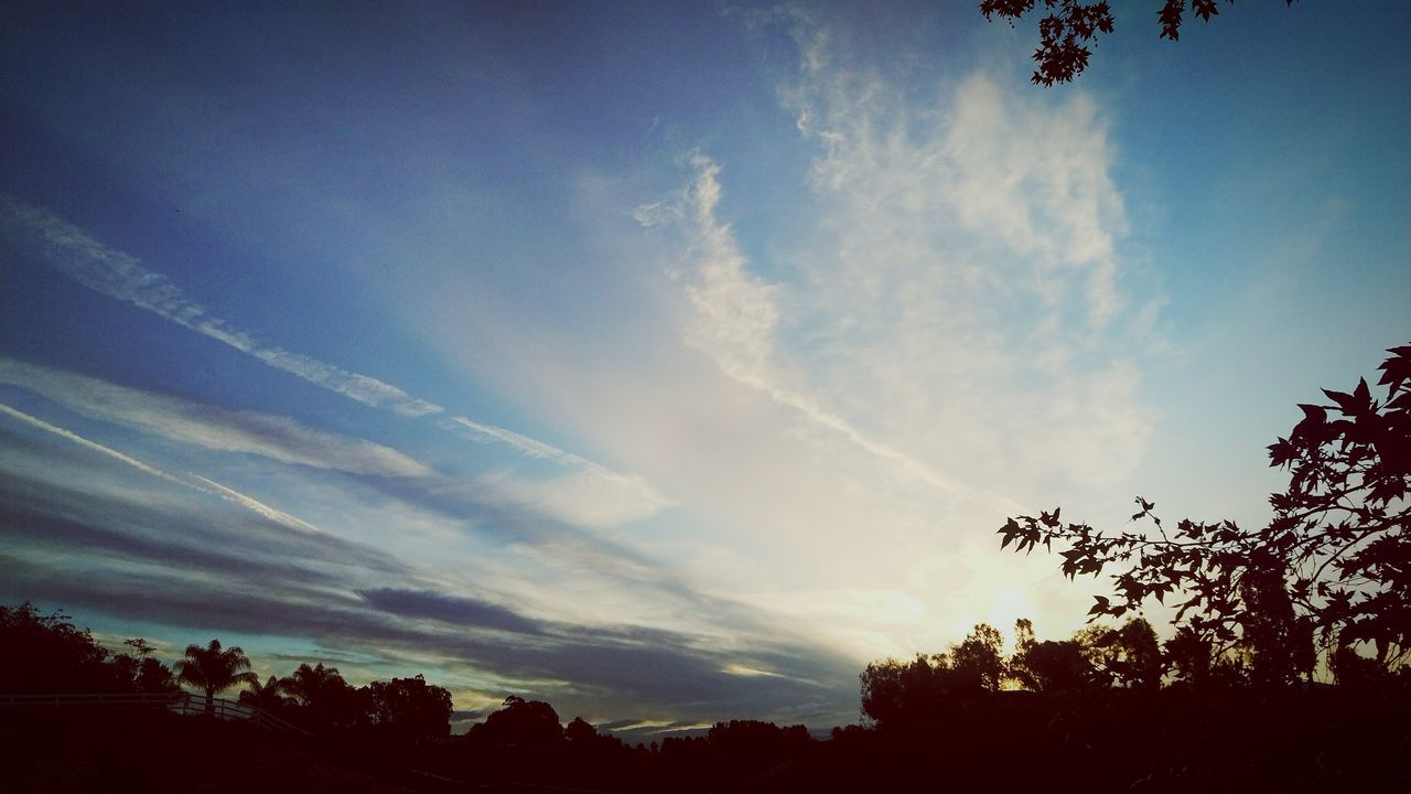sky, tree, silhouette, nature, beauty in nature, no people, low angle view, tranquility, cloud - sky, scenics, outdoors, sunset, day