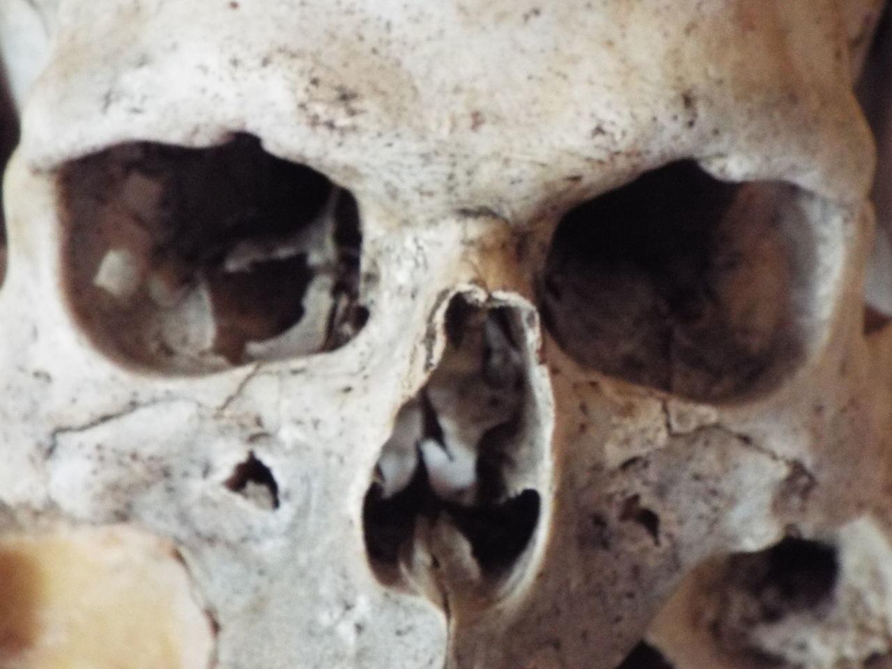 human skull, animal skull, bone, human skeleton, skull, spooky, animal bone, animal body part, close-up, human bone, skeleton, human body part, anatomy, indoors, horror, day