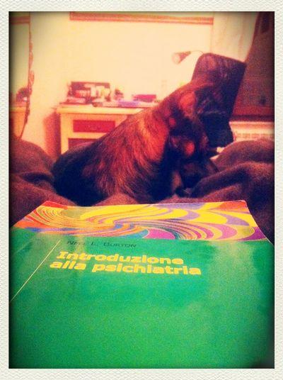 Enjoying Life Relaxing Psichotic Studying