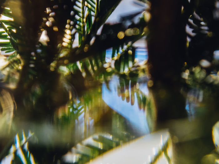 Plant Selective Focus Tree No People Nature Close-up Reflection Growth Indoors  Day Water Leaf Beauty In Nature Green Color Decoration Plant Part Illuminated Animal Glass