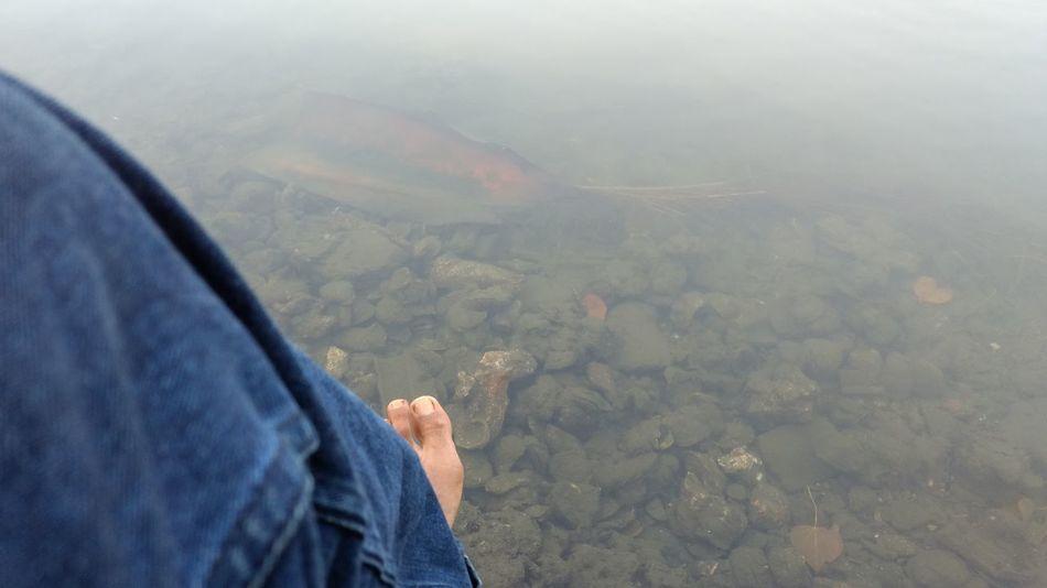 Leg Waterscape