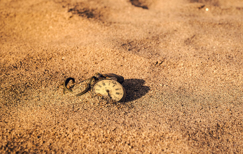 Close-up of snake on sand