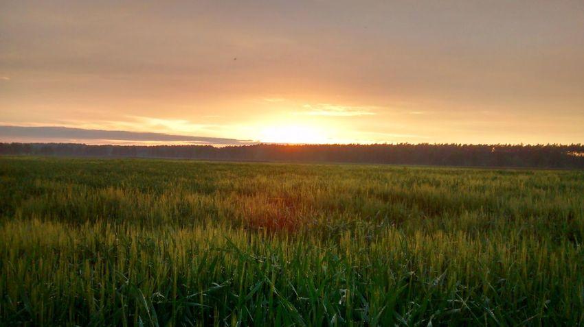 Sunset Countryside Nature Summer