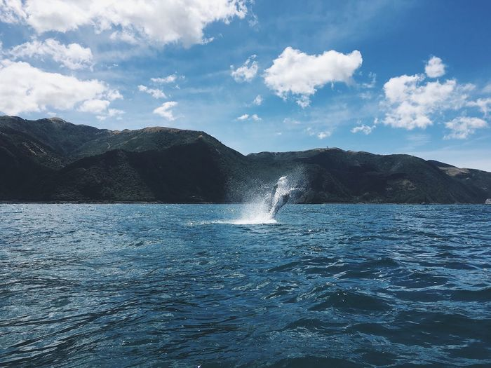 Scenic view of breaching whale