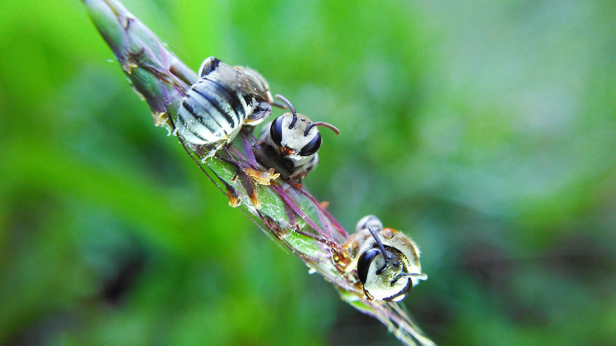 Macro Insect Nature Beauty In Nature Sleeping Mobilephotography Bees Bee 🐝
