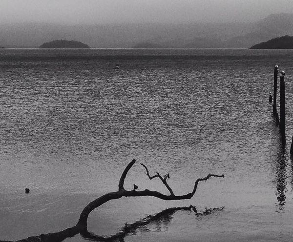 Shades Of Grey Black & White Seagulls LochLomond Pivotal Ideas