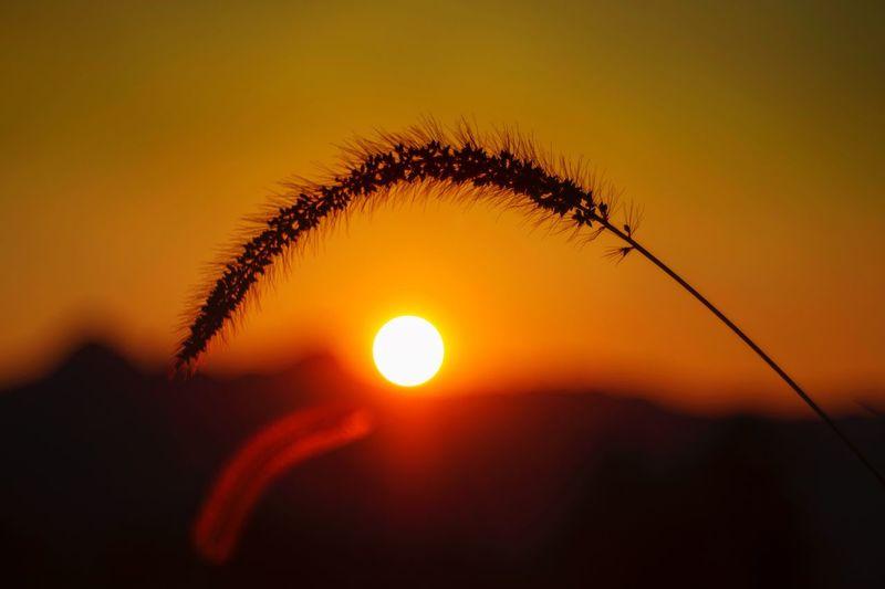 夕阳 Sun Mix