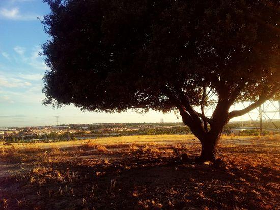 Atardecer en LaDehesa de Sanse con Madrid y sus torres de fondo GetYourGuide Cityscapes