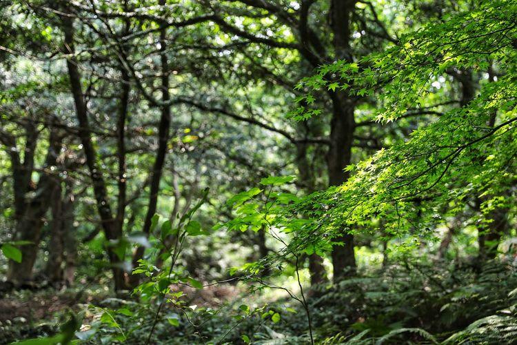 햇살이 뜨거울수록 시원해지는 숲 . . #하루한컷 #비자림 #숲 #5DMARK4 #신계륵 #EF2470F28LIIUSM Tree Forest Branch Green Color