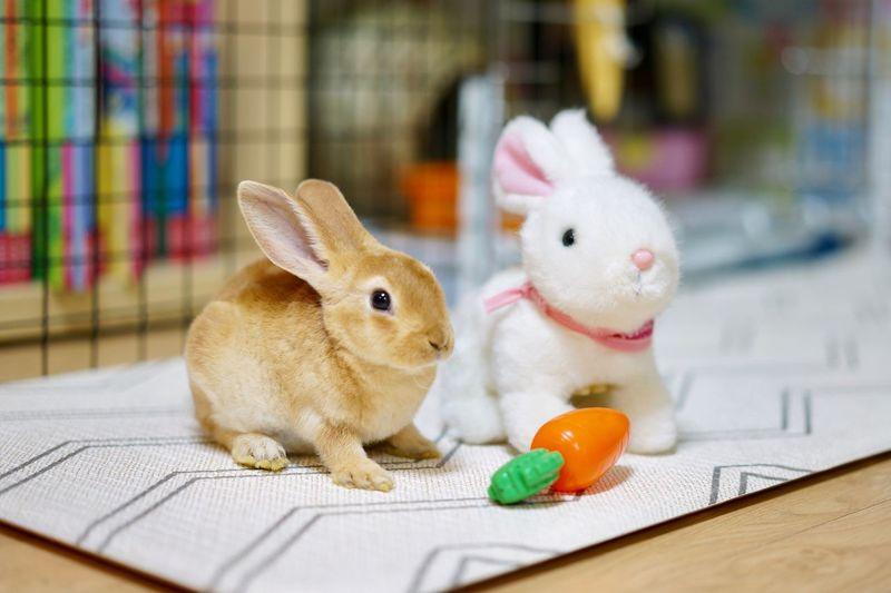 Rabbit Portrait Rabbit 🐇 Bunny  Rabbit Mammal Animal Rabbit - Animal Toy Easter Animal Themes Stuffed Toy Animal Representation No People Close-up Easter Bunny Cute Domestic Animals Pets