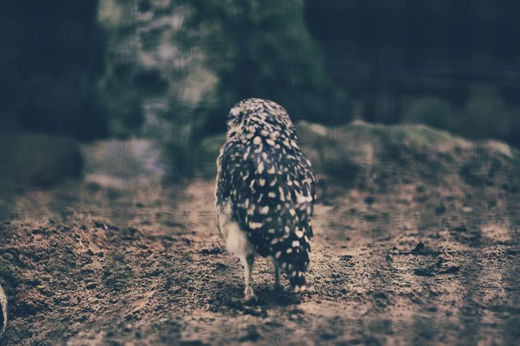 Animal Themes Animals In The Wild Beauty In Nature Bird Day Field Focus On Foreground Nature No People One Animal Tranquility Wildlife Zoology